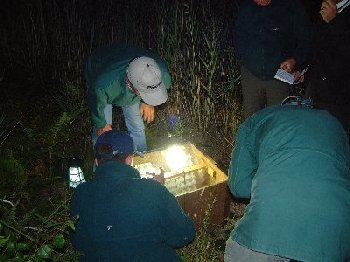 Moth night - inspecting one of the traps